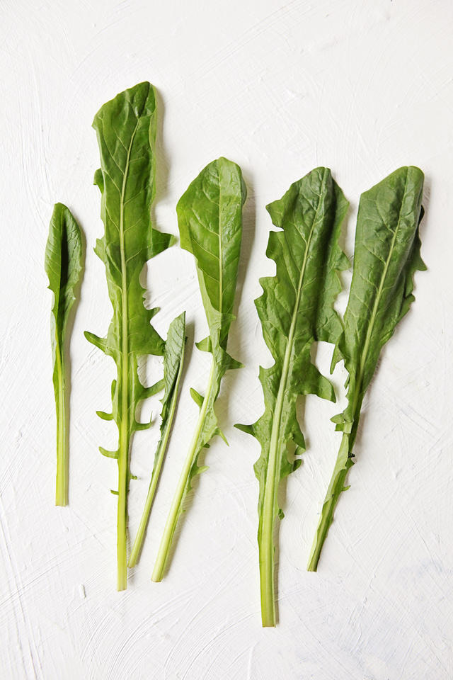 Dandelion greens are way better than your average weed, Sunflower Family, Vitamins - A, C & K